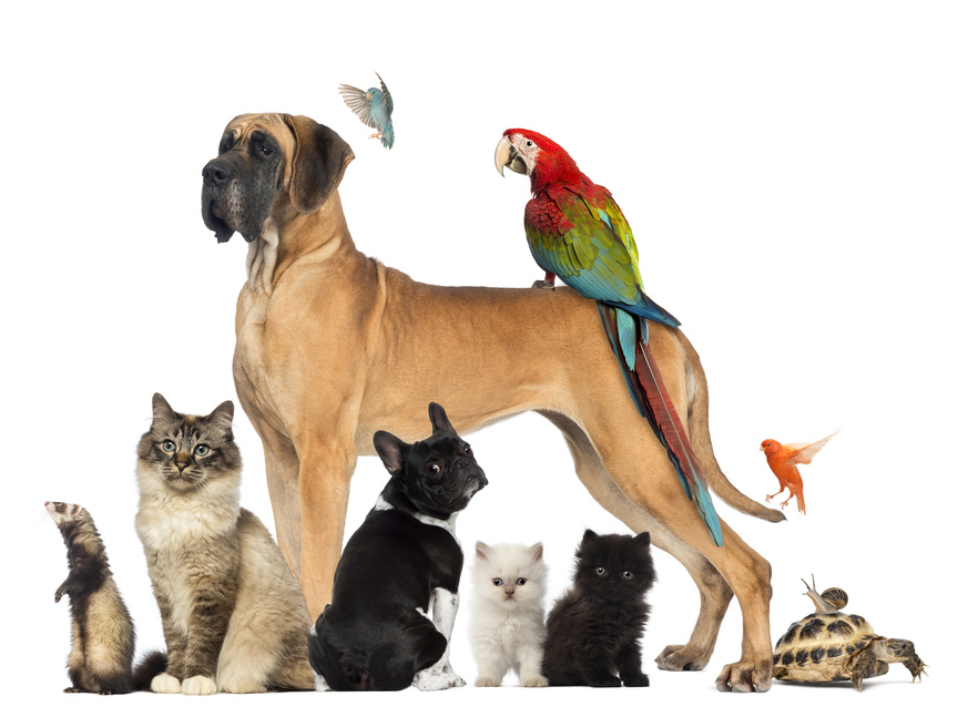 Dogs, cats and exotics.