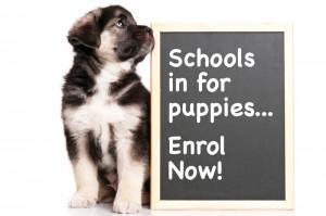 puppy_school_tile