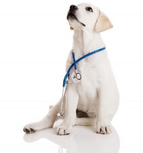 puppy_stethoscope