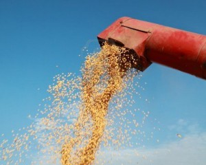 grain-auger-of-combine-pouring-soy-bean-1024x1024