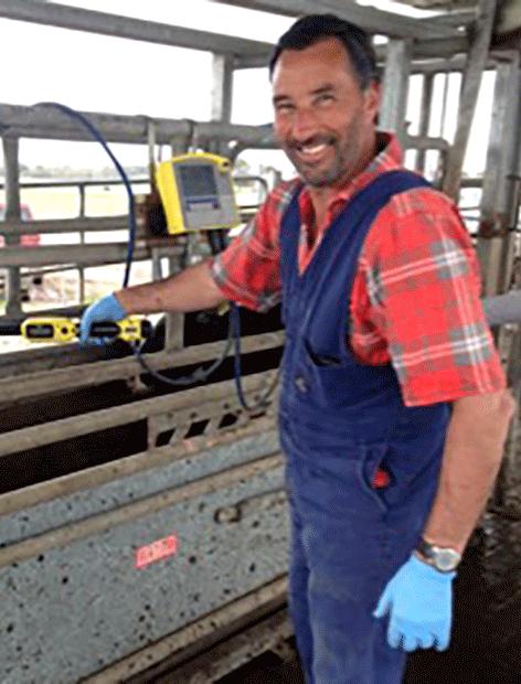 Dairy Technician, Phil Keegan, weighing heifers.